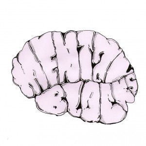 MENATL-BLOCKS-BRAIN-ONLY-1024x1024